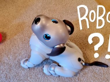 Our New Dog, AIBO: Amazing, Cuteness OVERLOAD!