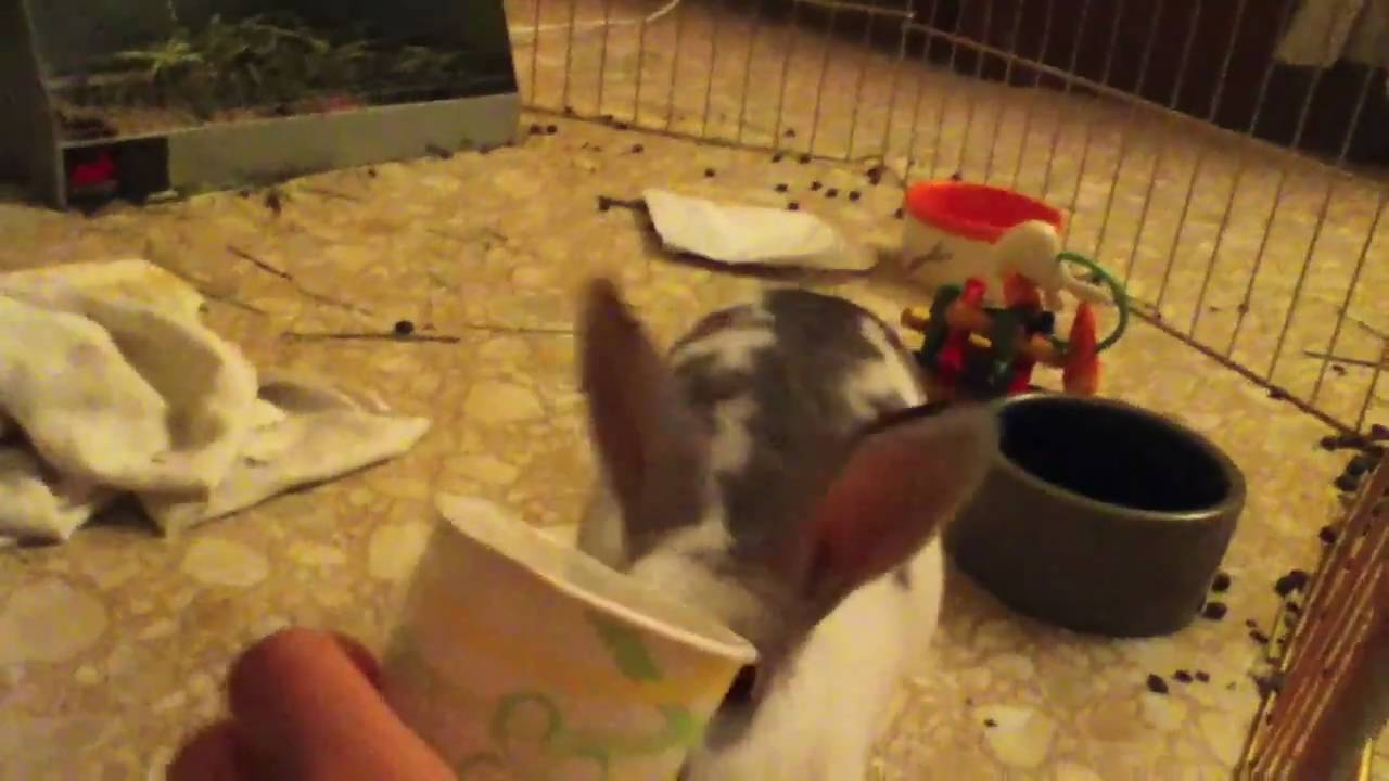 1 bunny 1 cup – FUNNY!